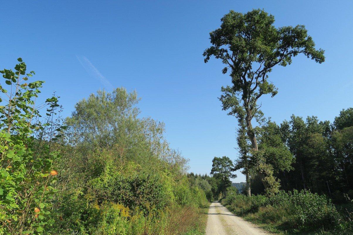 Breiter Weg - aber strahlendblauer Himmel auf meiner ersten Etappe auf dem Schluchtensteig