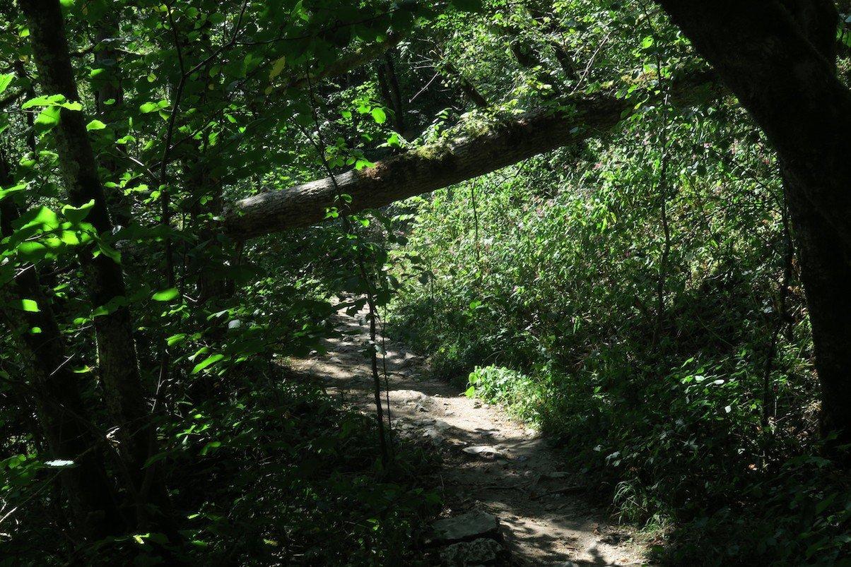 Wieder ein Baum, den es zu unterqueren heißt auf dem Schluchtensteig