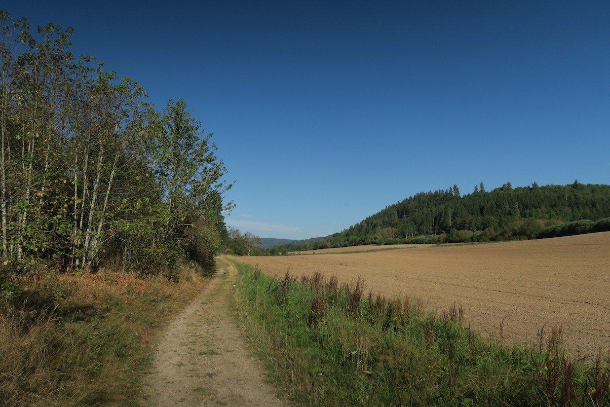 Am Rande des Feldes geht es entlang, bei strahlend blauen Himmel