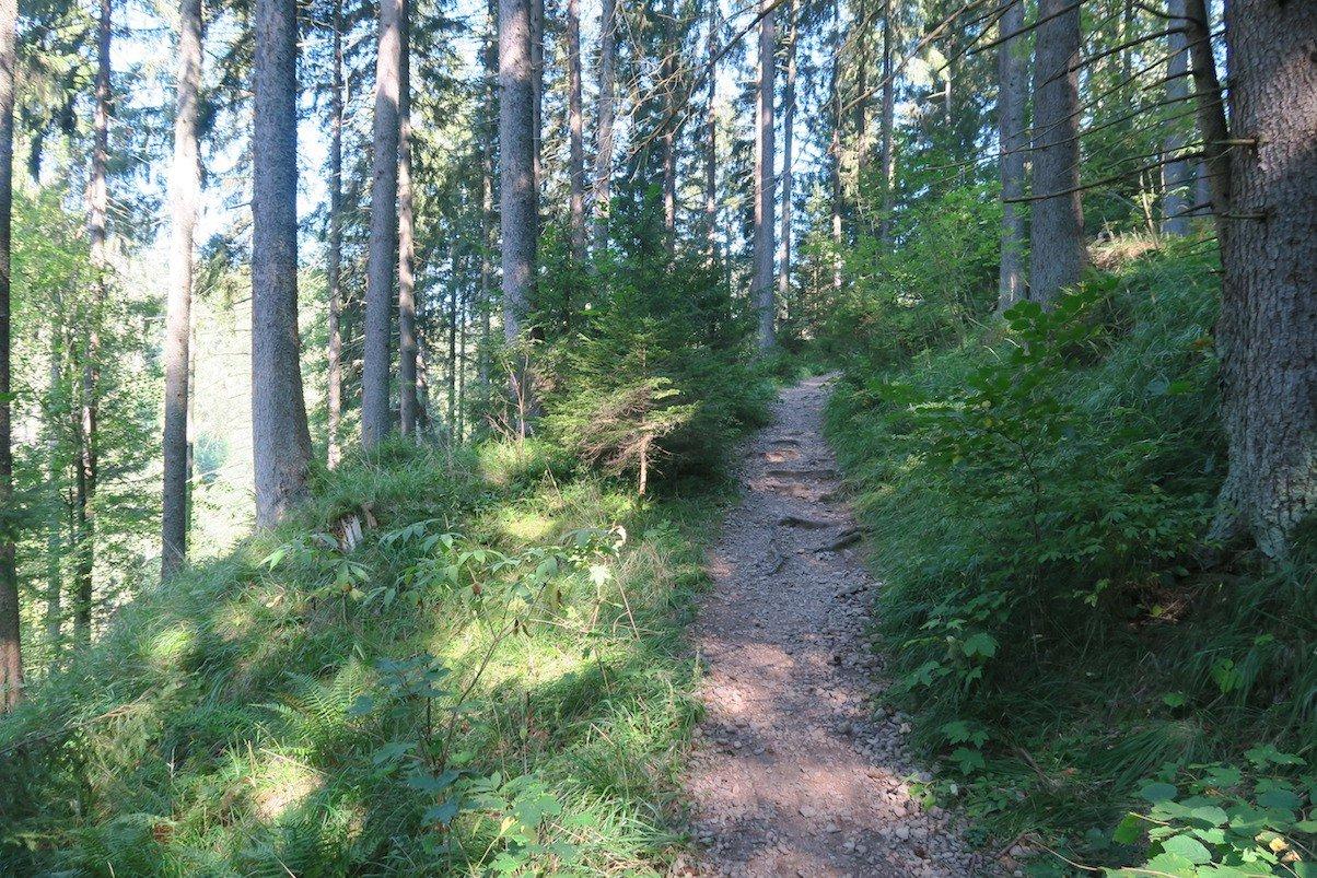 Schön wurzliger Waldweg