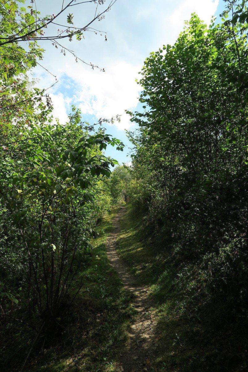 Weg zum Geopark Lenzkirch