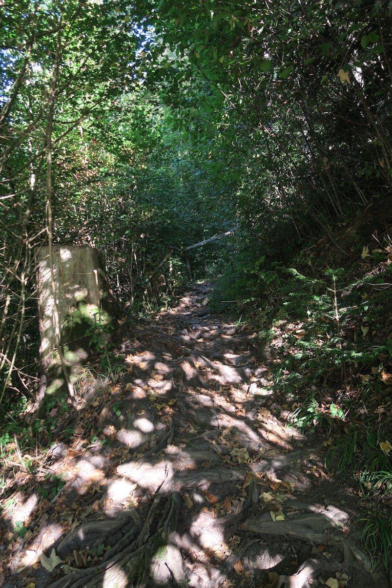 Zu Beginn gehts steil hoch auf einem schönen wurzligen Waldweg auf der 3. Etappe des Schluchtensteigs