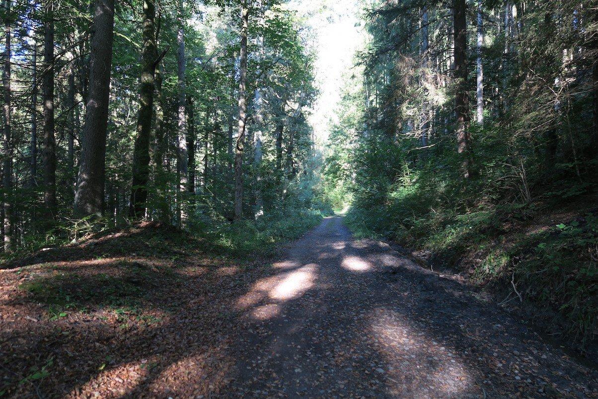 Breiter Waldweg auf der 3. Etappe des Schluchtensteigs