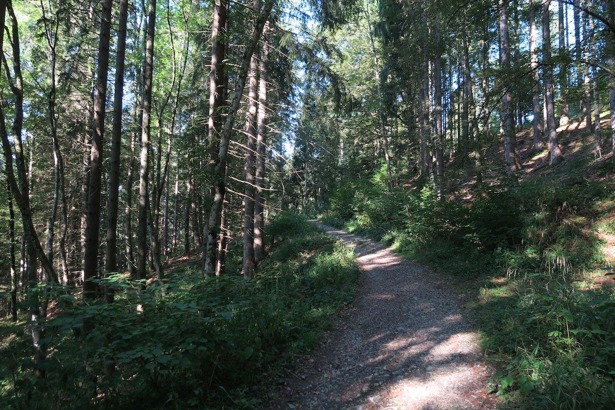 Der Waldweg wird schmaler und gefällt mir so noch besser