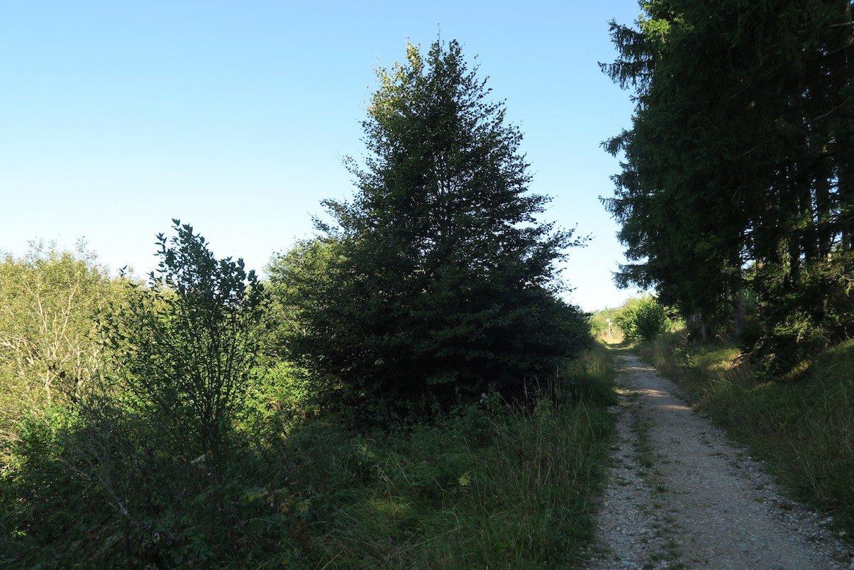 Der Weg lichtet sich