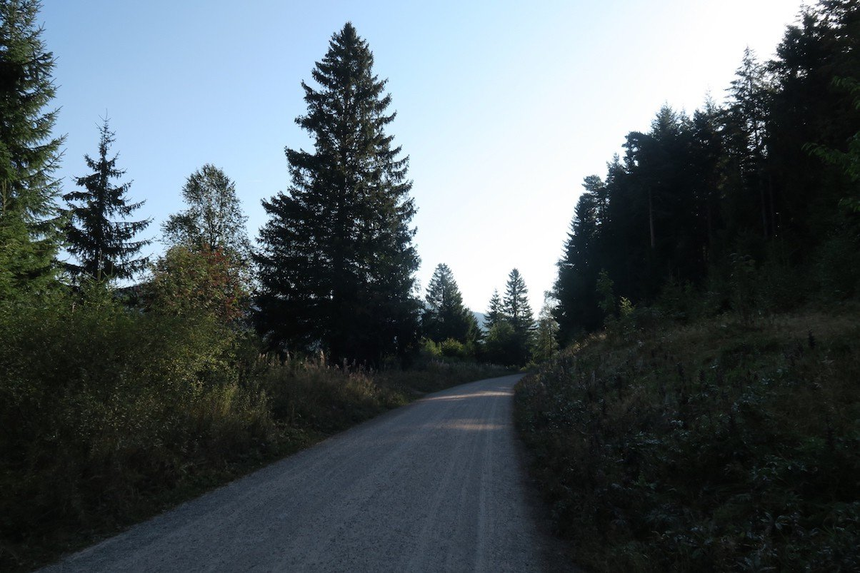Breiter Wirtschaftsweg, der mich so die nächsten Kilometer begleiten wird auf dem Schluchtensteig