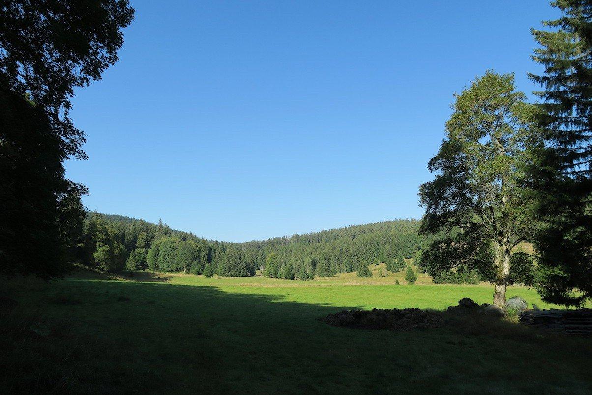 Wiese auf halber Strecke der heutigen Tagesetappe - nach wie vor bei strahlend blauen Himmel