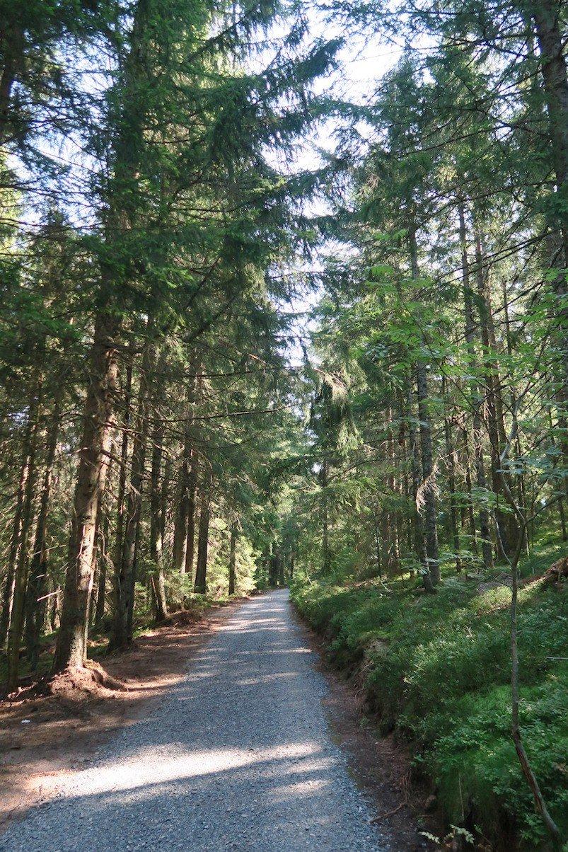 Ein offenbar frisch in den Wald geschnittener Weg auf dem Schluchtensteig, 5,5 km vor St. Blasien
