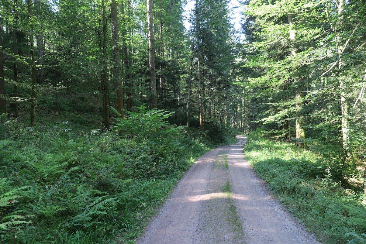 Breiter Weg durch den Wald