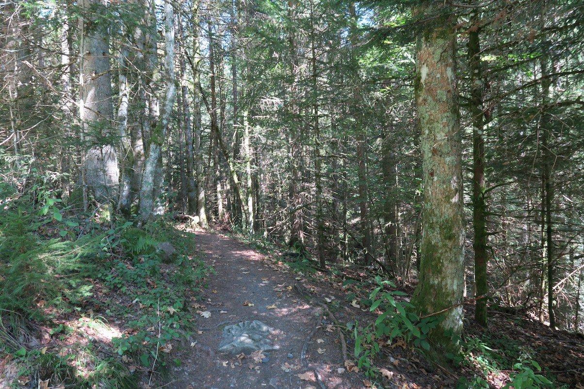 Schmaler Waldweg führt die wenigen Meter hinunter in die Windbergschlucht