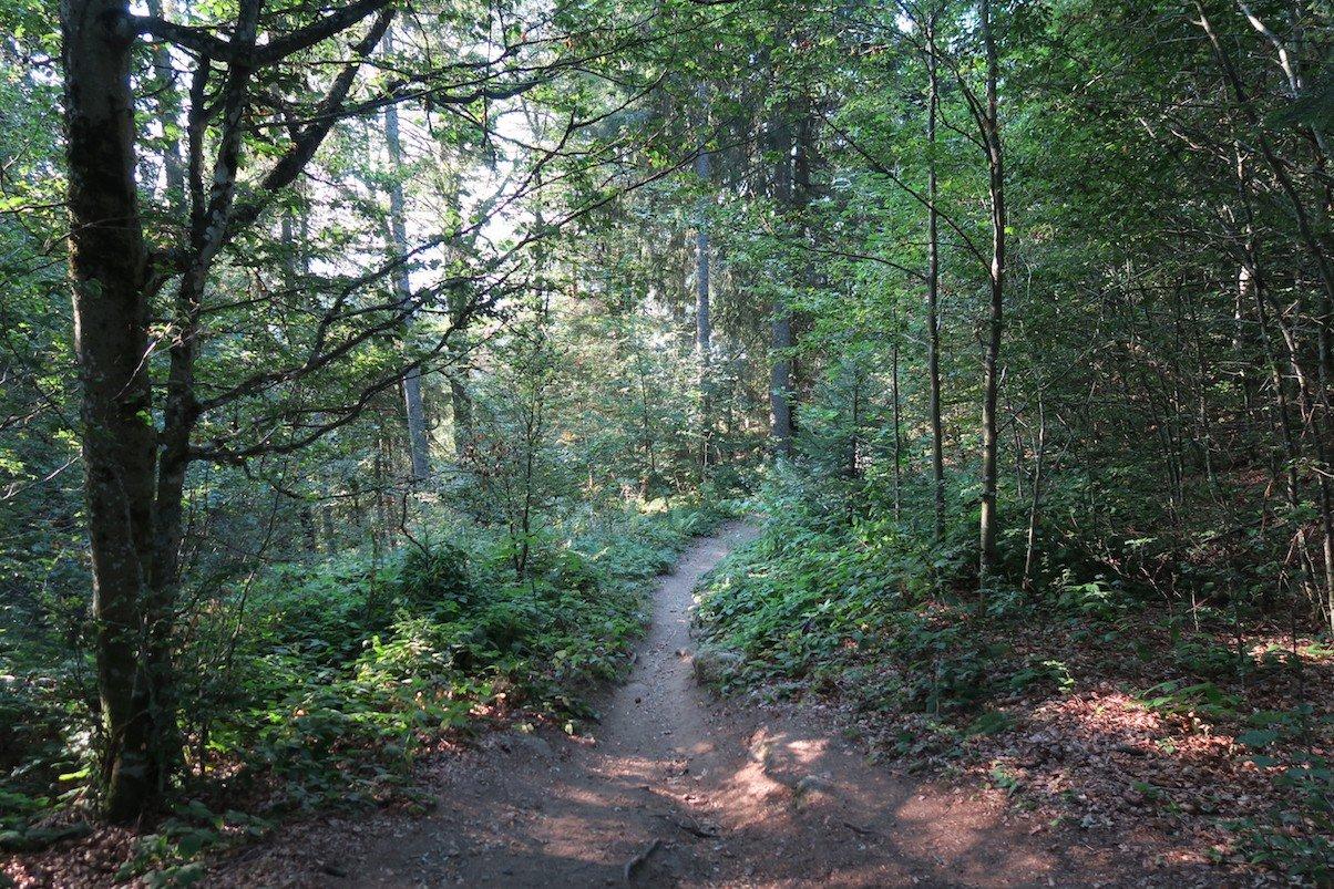 Pfad durch den Wald bergab auf dem Schluchtensteig