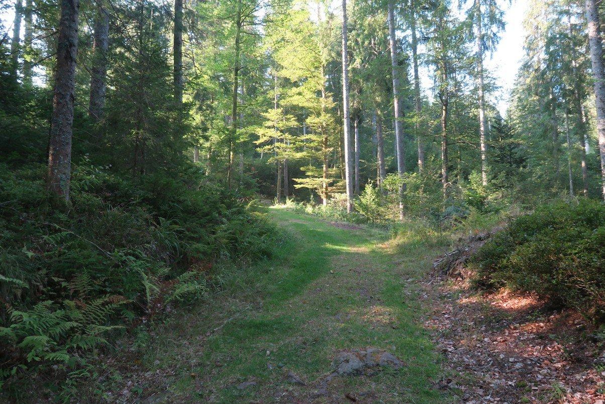 Schöner heller Waldweg
