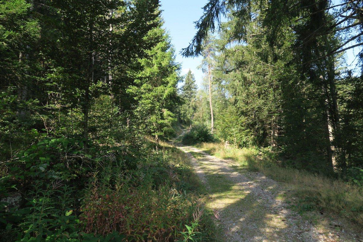 Schotterweg kurz nach dem Landgasthof Klosterweiherhof