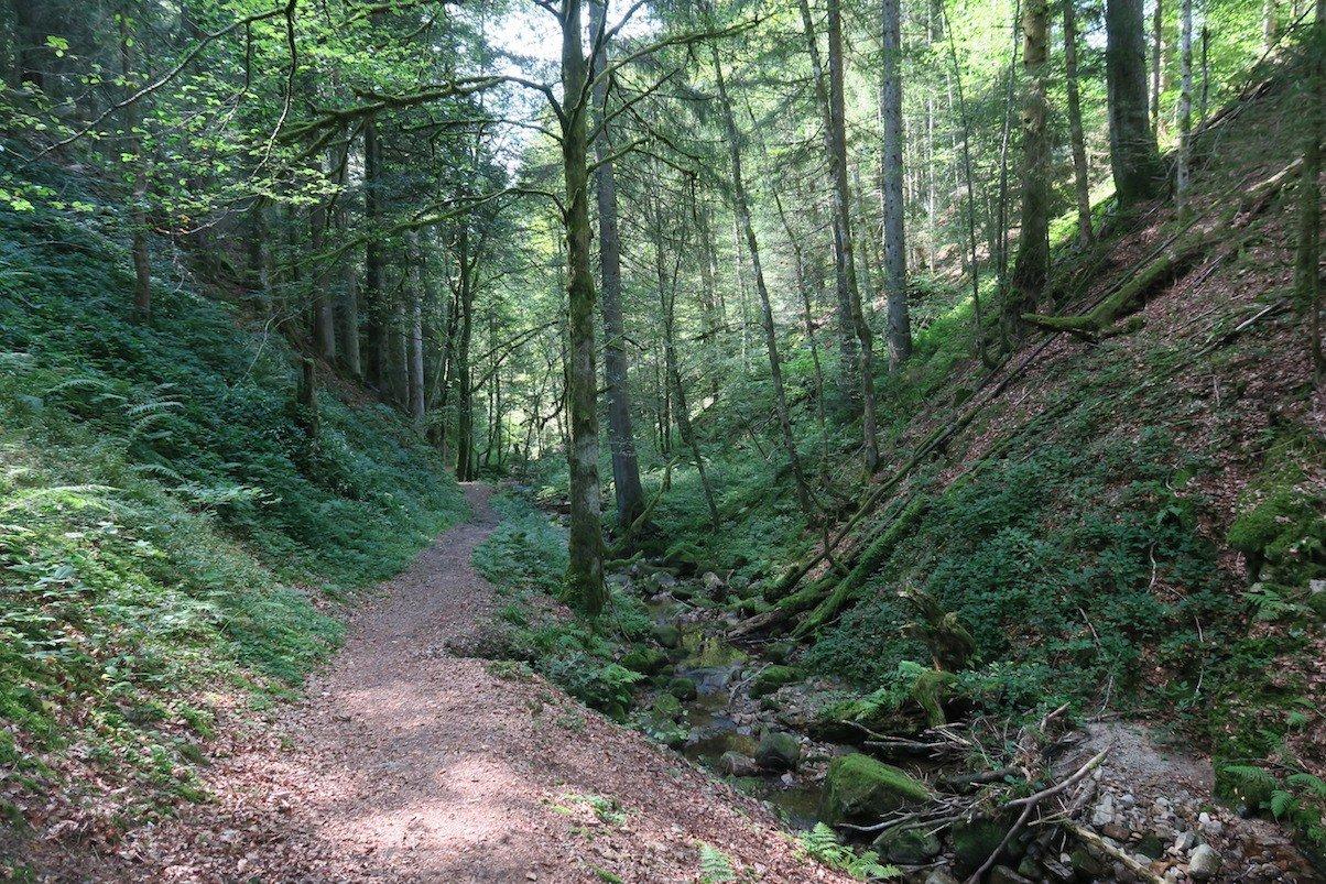 Schöne Umgebung zum Laufen in der Schlucht