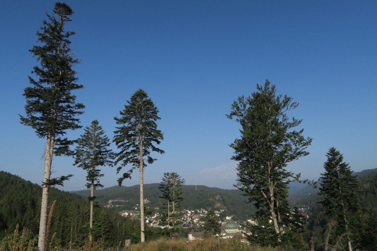 Ausblick von der Aussicht Luisenhöhe auf dem Schluchtensteig, knapp 30 Minuten nach dem Start in St. Blasien