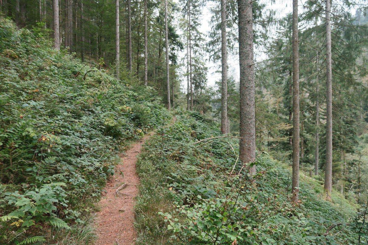 schluchtensteig-etappe6-todtmoos-wehr_19