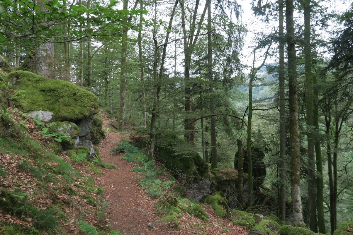 schluchtensteig-etappe6-todtmoos-wehr_22