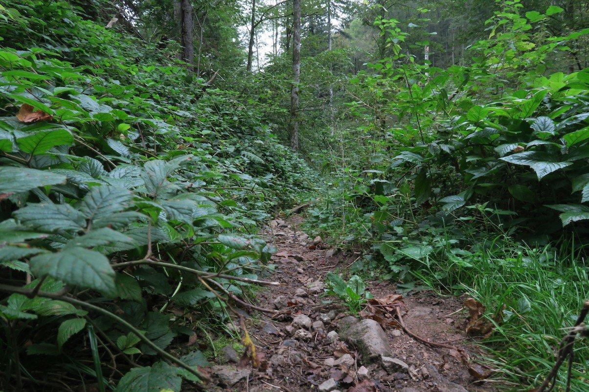 Der Weg fast aus Bodenperspektive
