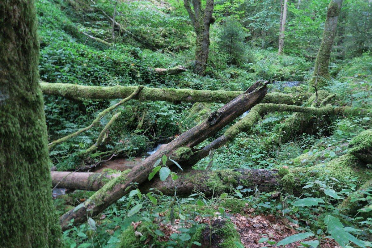 Holzstämme liegen hier auch quer und natürlich unaufgeräumt rum