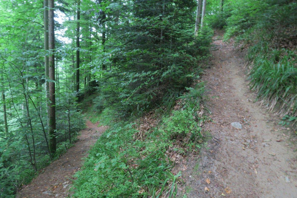 schluchtensteig-etappe6-todtmoos-wehr_34