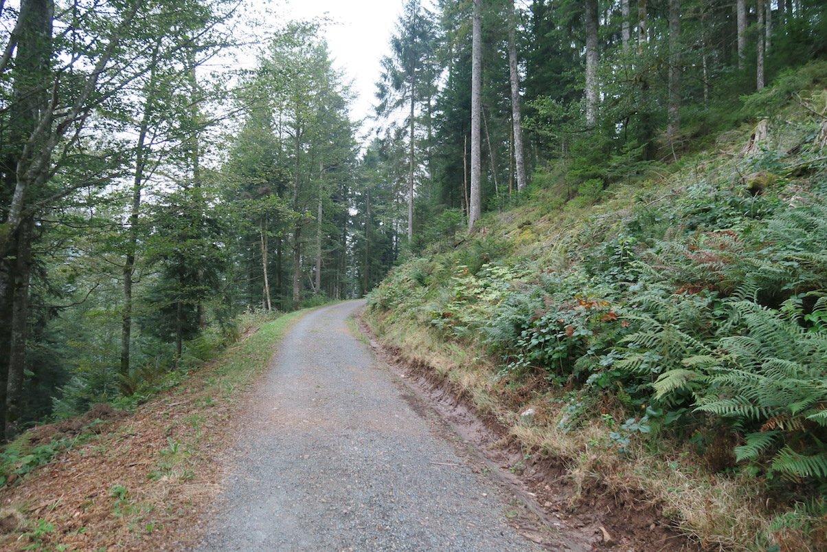 Breiter Waldweg aka Wanderautobahn auf der 6. Etappe des Schluchtensteigs