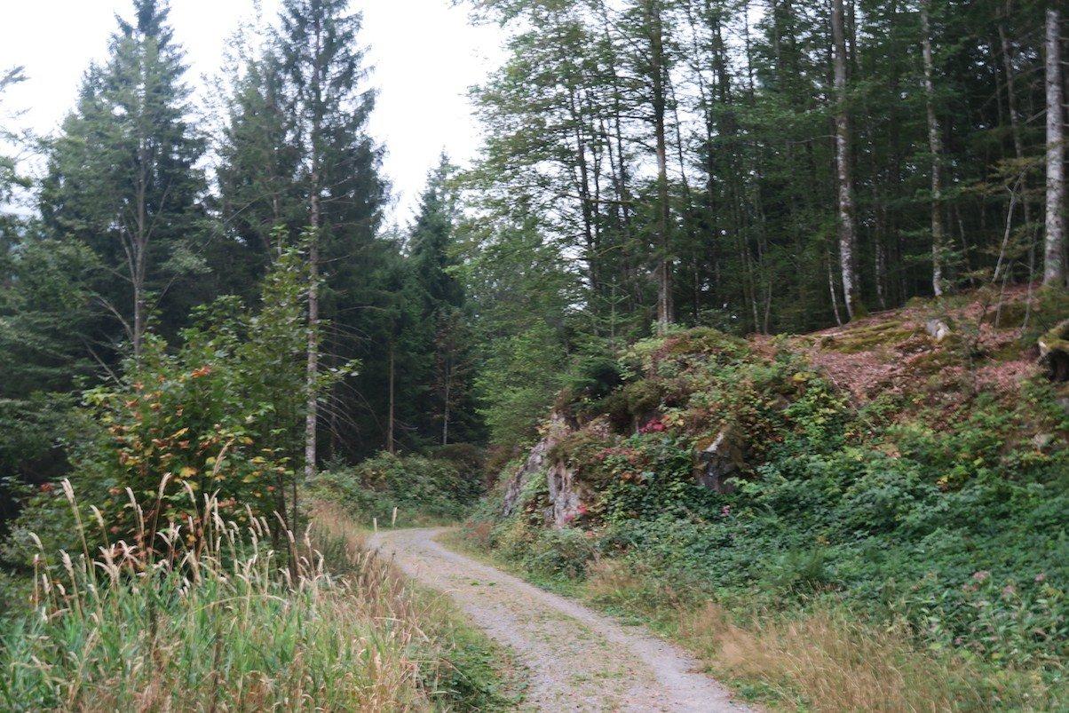 Die Landschaft wird vielfältiger im Laufe des Weges auf dem Schluchtensteig