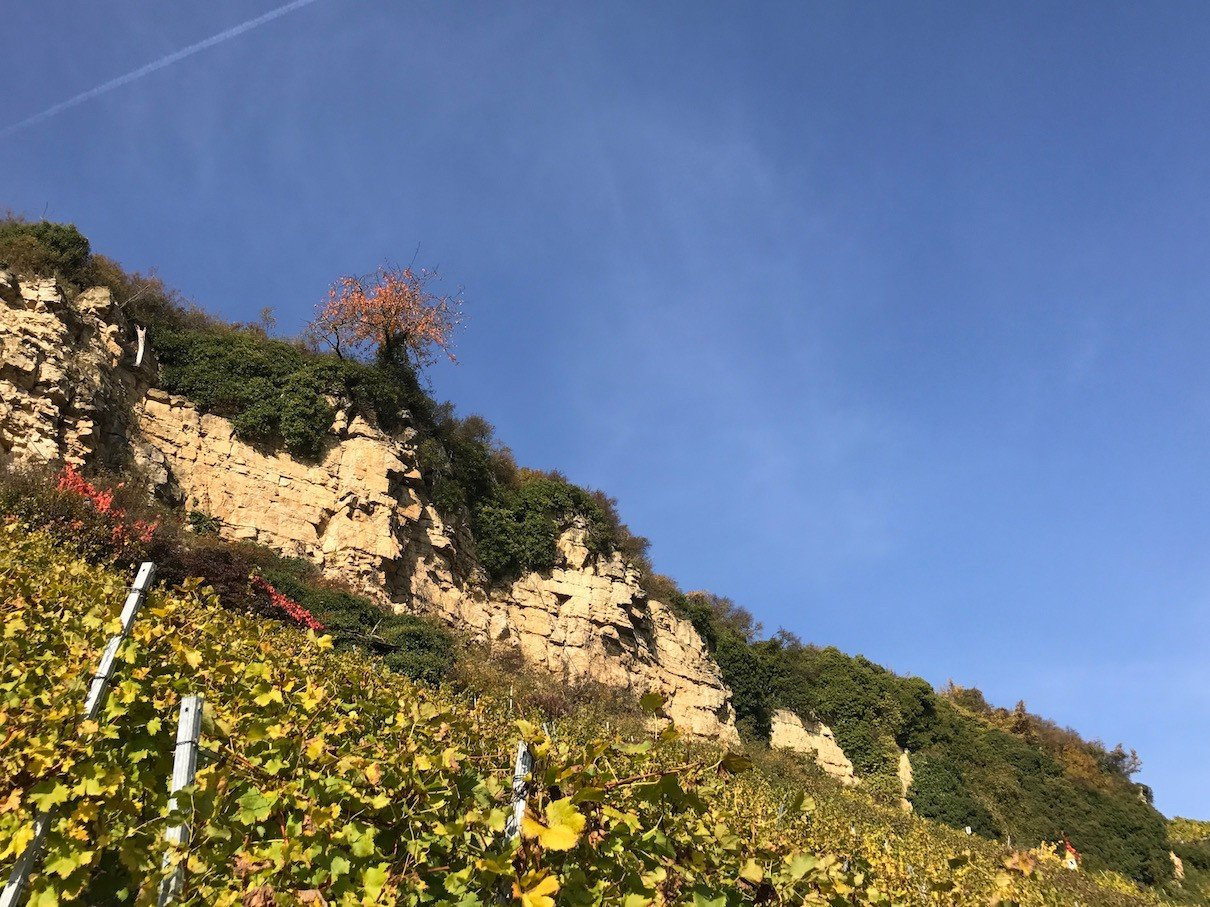 Ein Blick nach oben in Richtung Felsen und Himmel über den Weinbergen bei Mundelsheim und Hessigheim