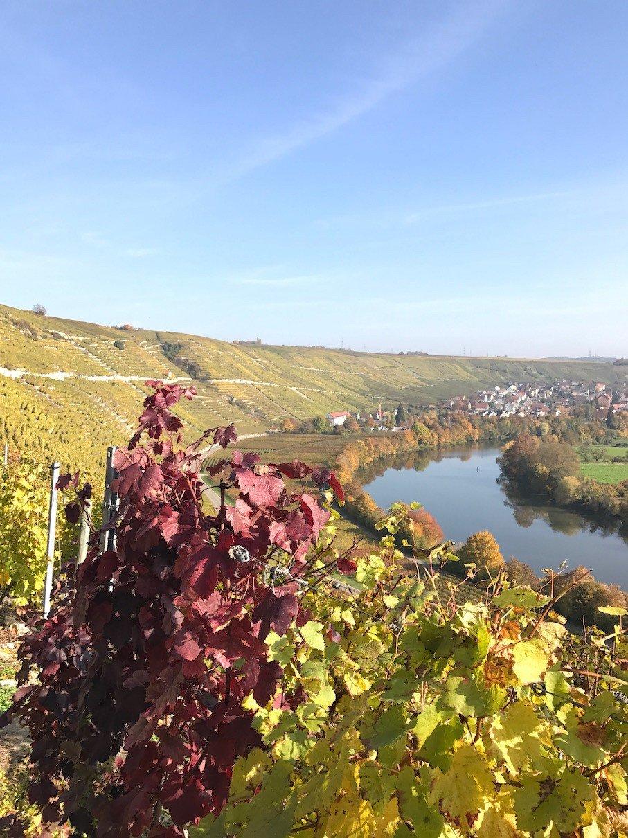 Ein Blick zurück in Richtung Neckar und Mundelsheim