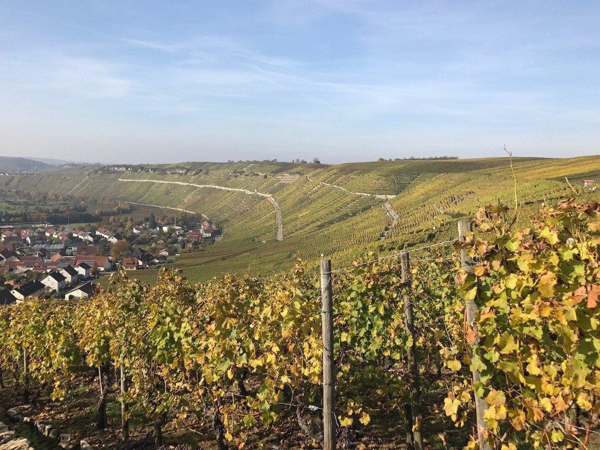 Der Ausblick auf die Weinberge und den Neckar, kurz nach dem Start vom Wanderparkplatz Mundelsheim