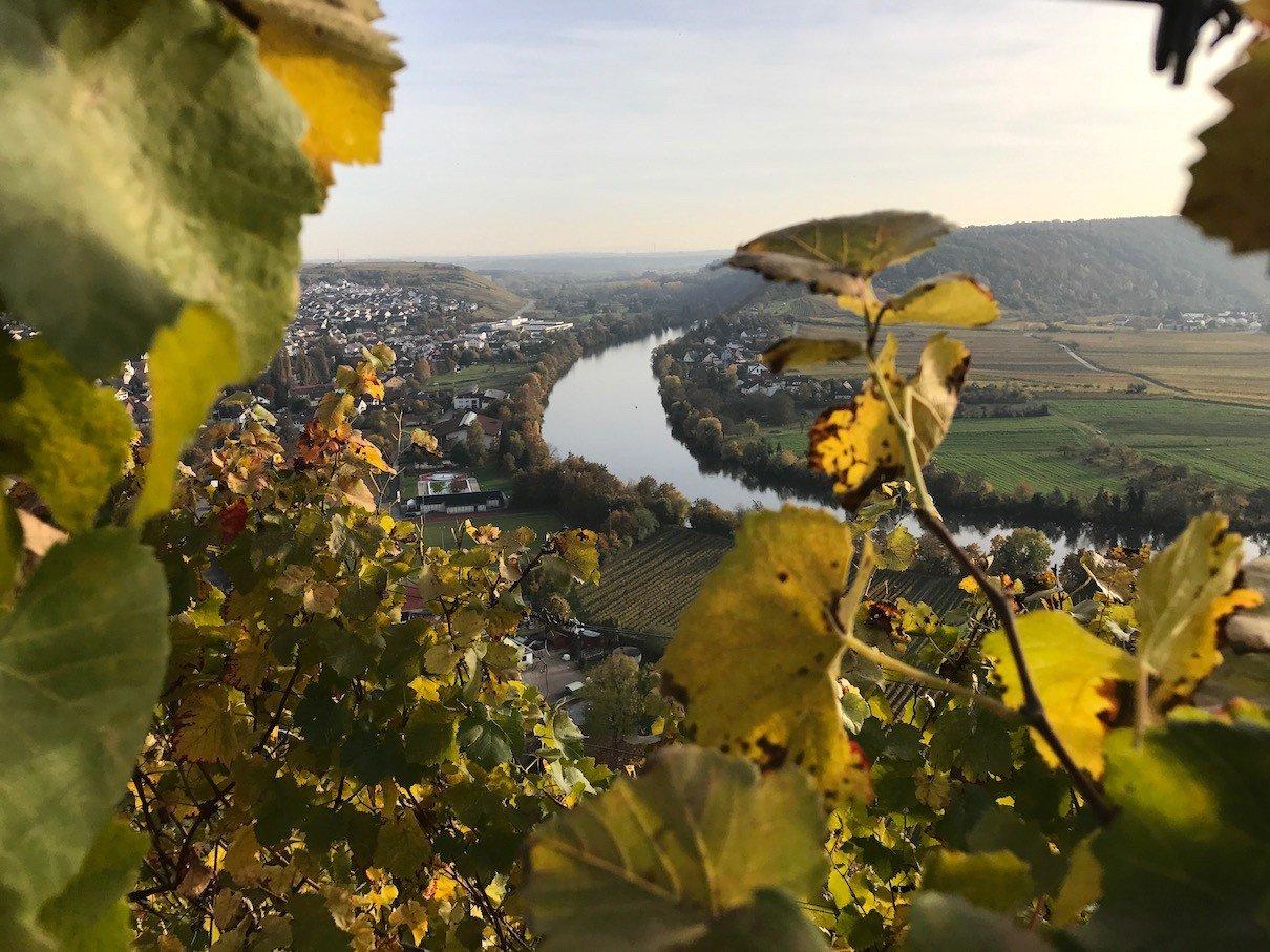herbst-weinberge-mundelsheim27