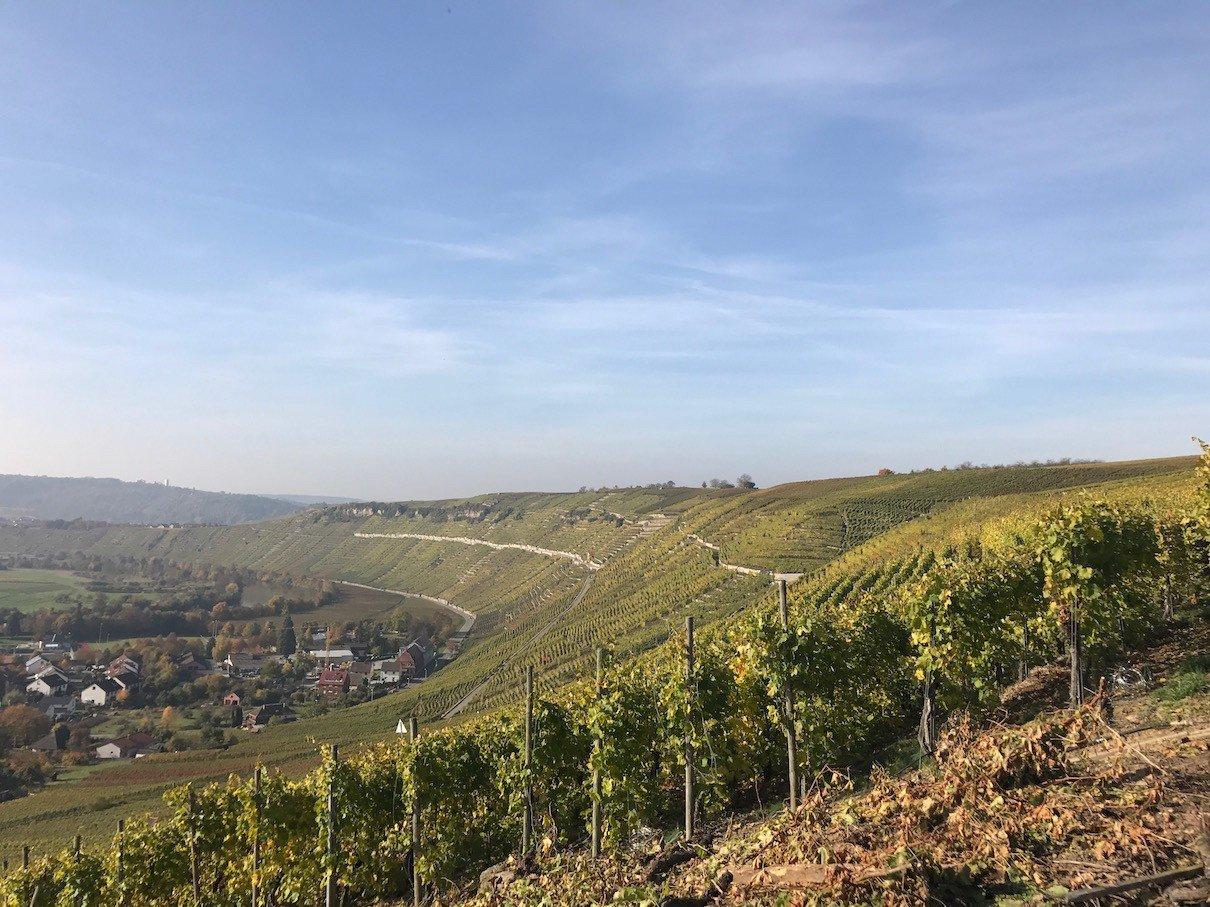 Ausblick über die Weinberge in Richtung Hessigheim