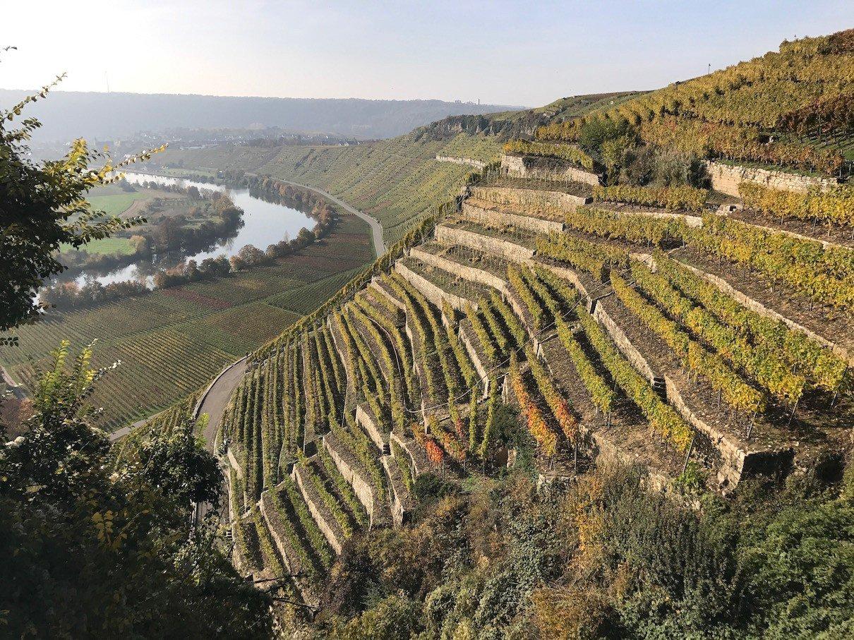 Blick über die Weinberge, die in Trassen angelegt sind, Blickrichtung Hessigheim