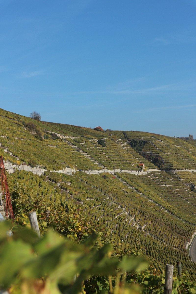 Ein Überblick über die Weinberge bei Mundelsheim (Foto: Gesine Hermann)
