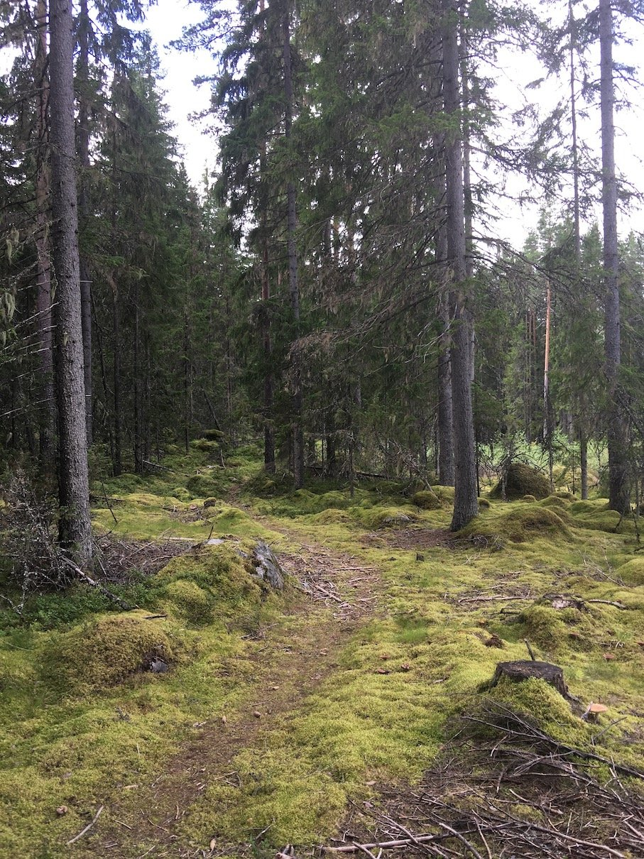Ein herrlicher Spaziergang durch den Wald erwartet uns