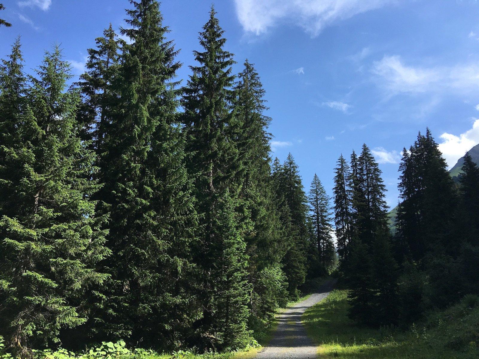 Lechweg zwischen Lech und Warth, mal im Schatten..