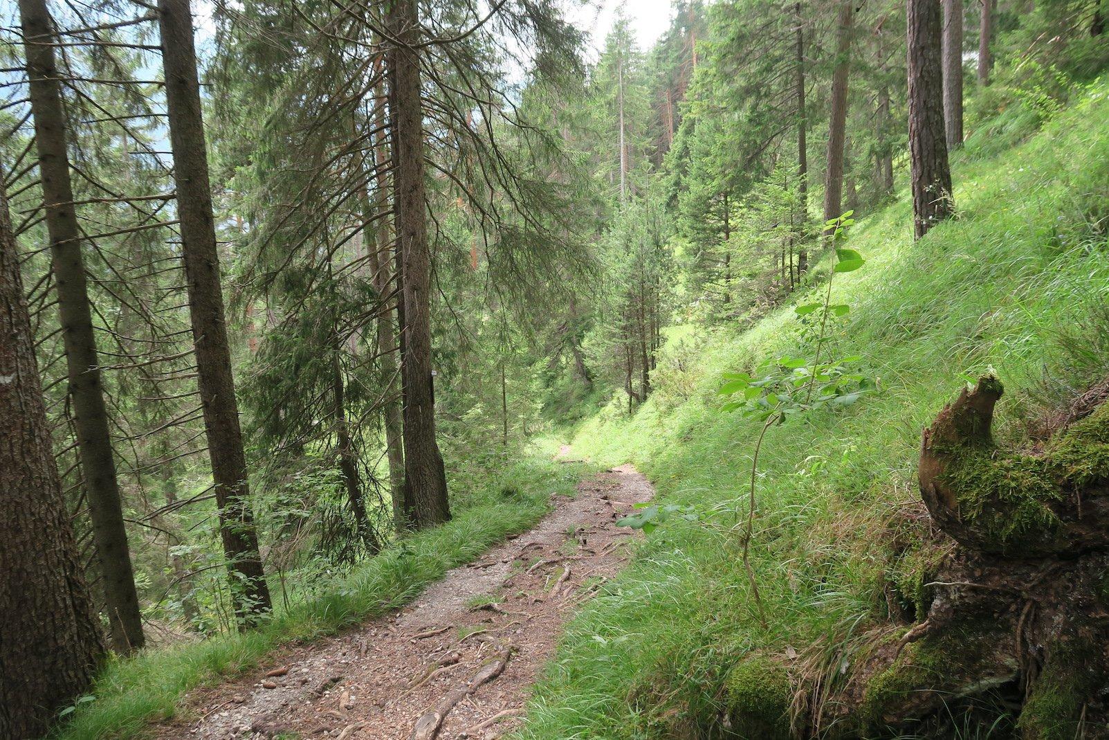 Waldweg auf dem Lechweg