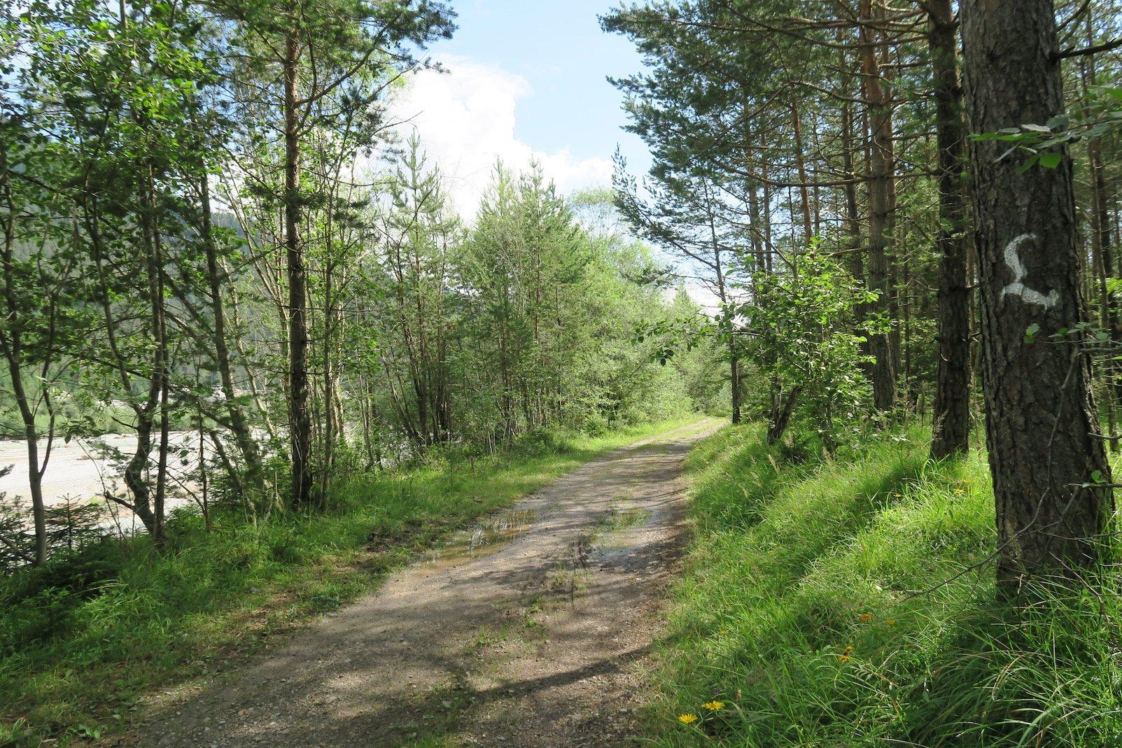 Gemütlicher Wanderweg mit ein wenig Schatten auf dem Lechweg