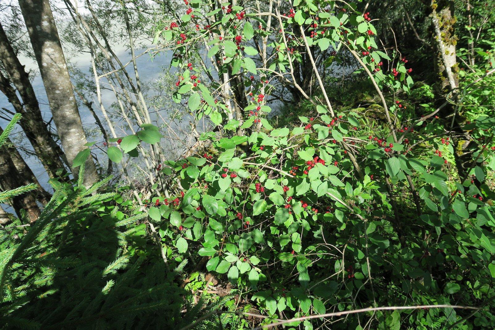 Pflanzen zwischen Lech und Lechweg