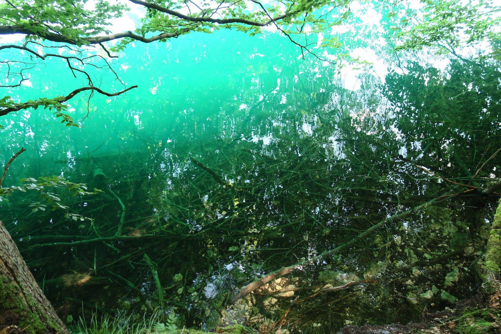 Klares Wasser, leicht grünlich - das ist der Alpsee am Lechweg