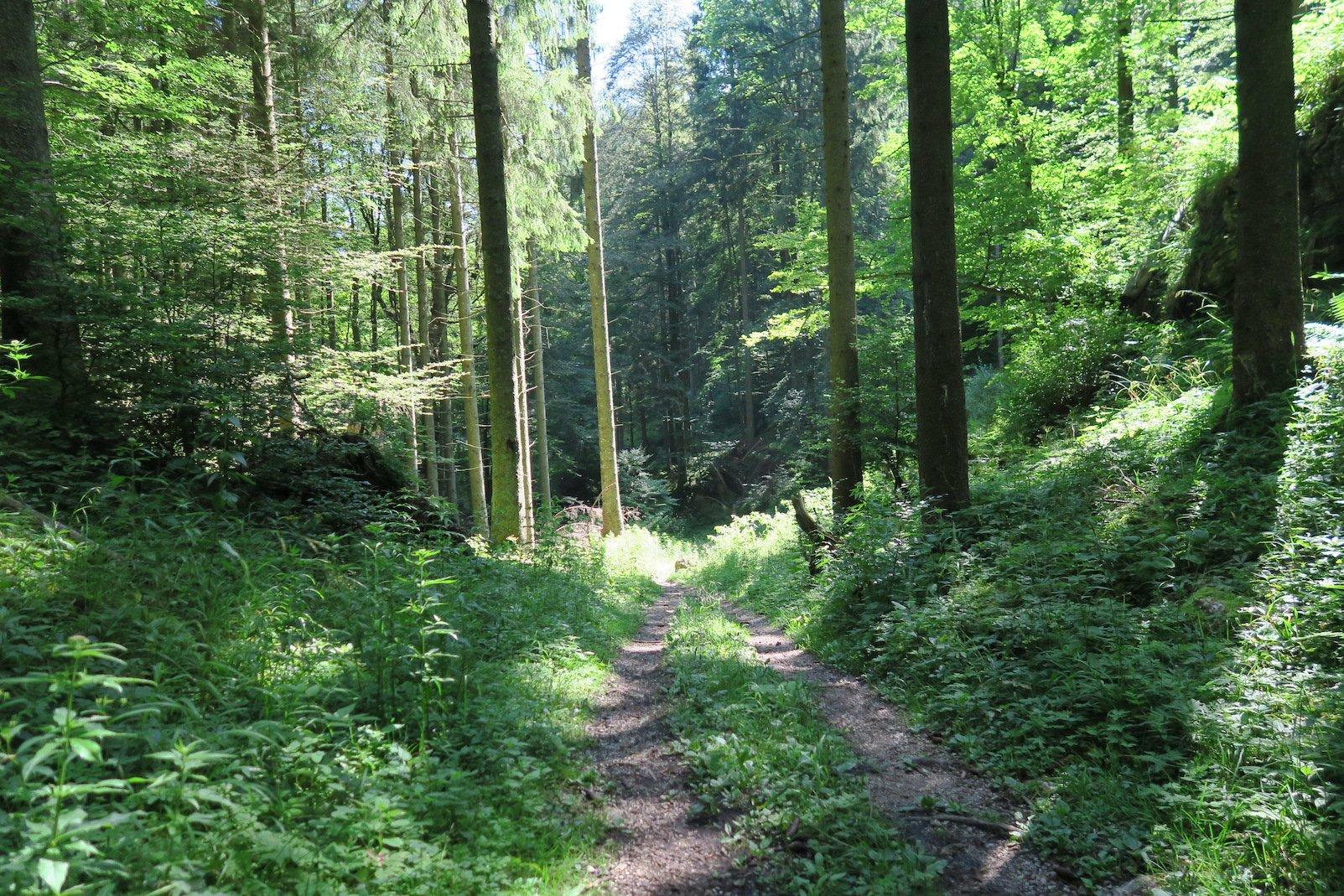 Im Wald ist es gleich angenehmer zu laufen