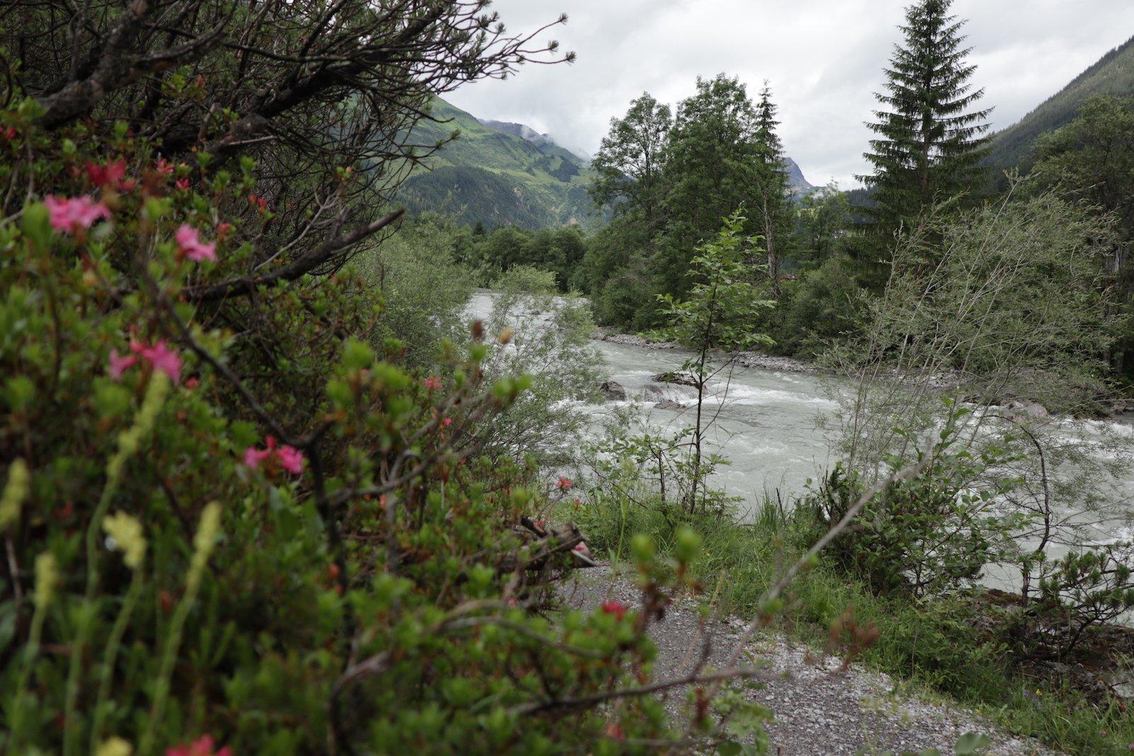 Erster Versuch mit der Alpenrose und dem Lech im Hintergrund: Blende weit auf, Fokus auf Lech