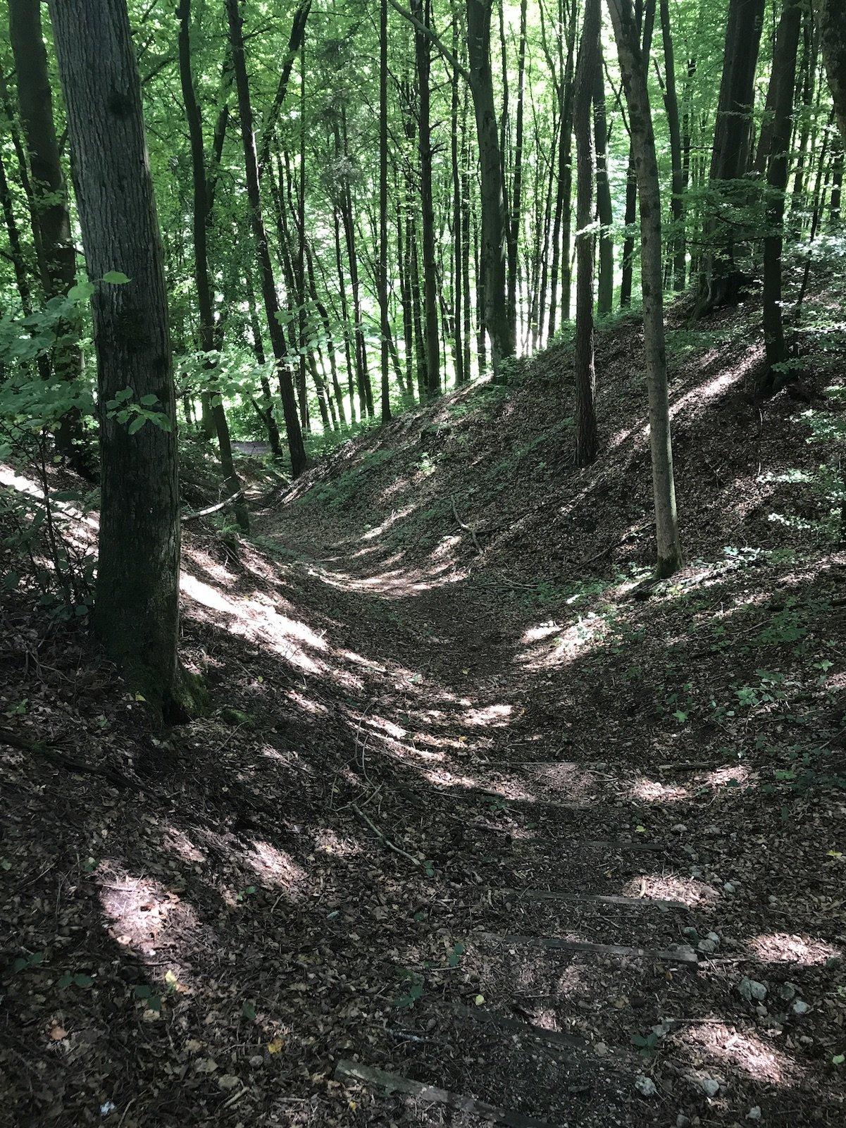Nochmal ein schönes kurzes Waldstück bergab