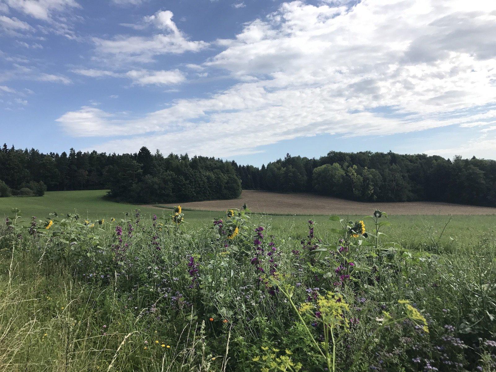 Herrlicher Ausblick über die Felder im Nürnberger Land
