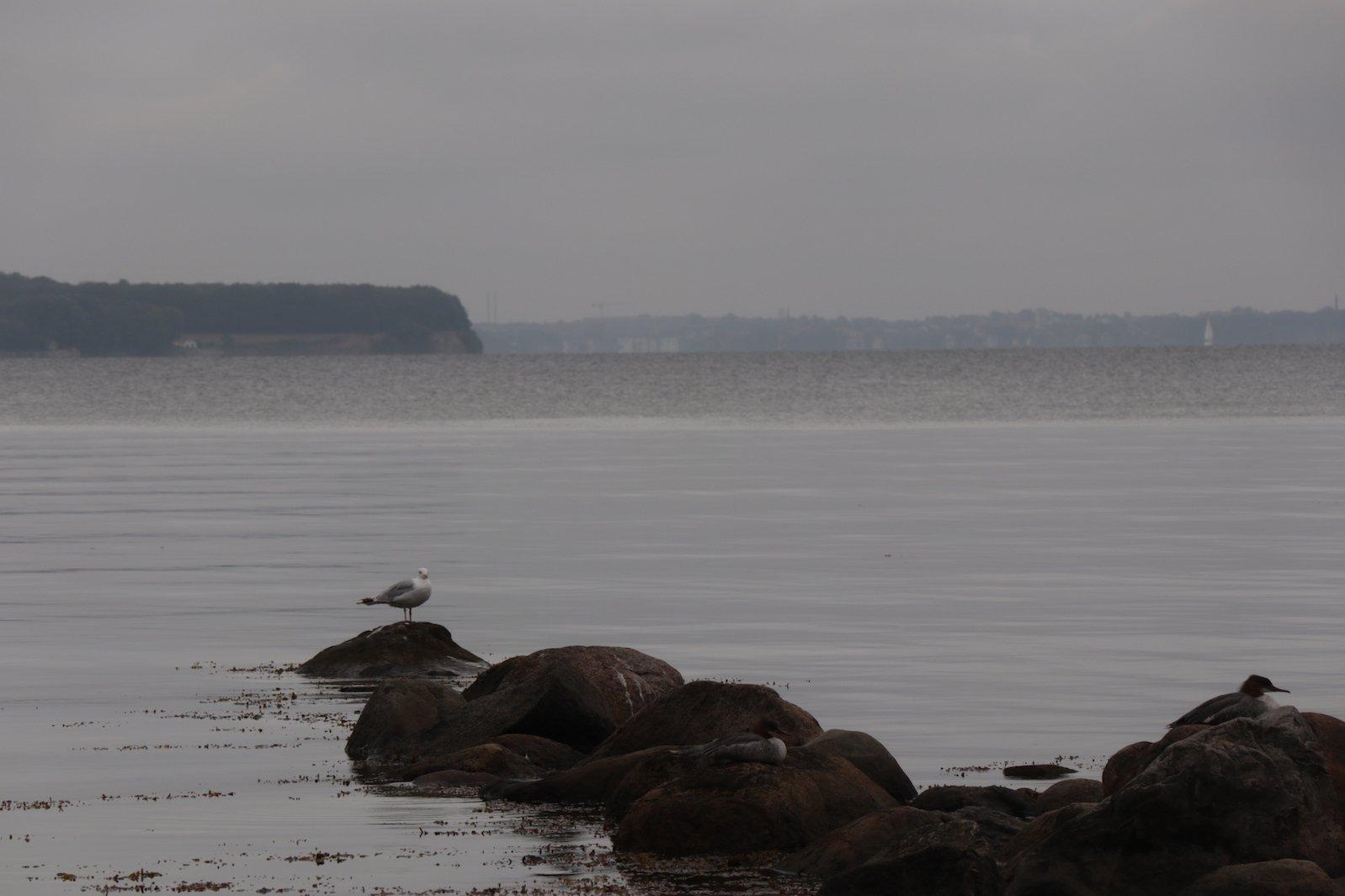 Eine Möwe auf dem letzten Stück Festland vor Dänemark (zumindest in Blickrichtung) ;)