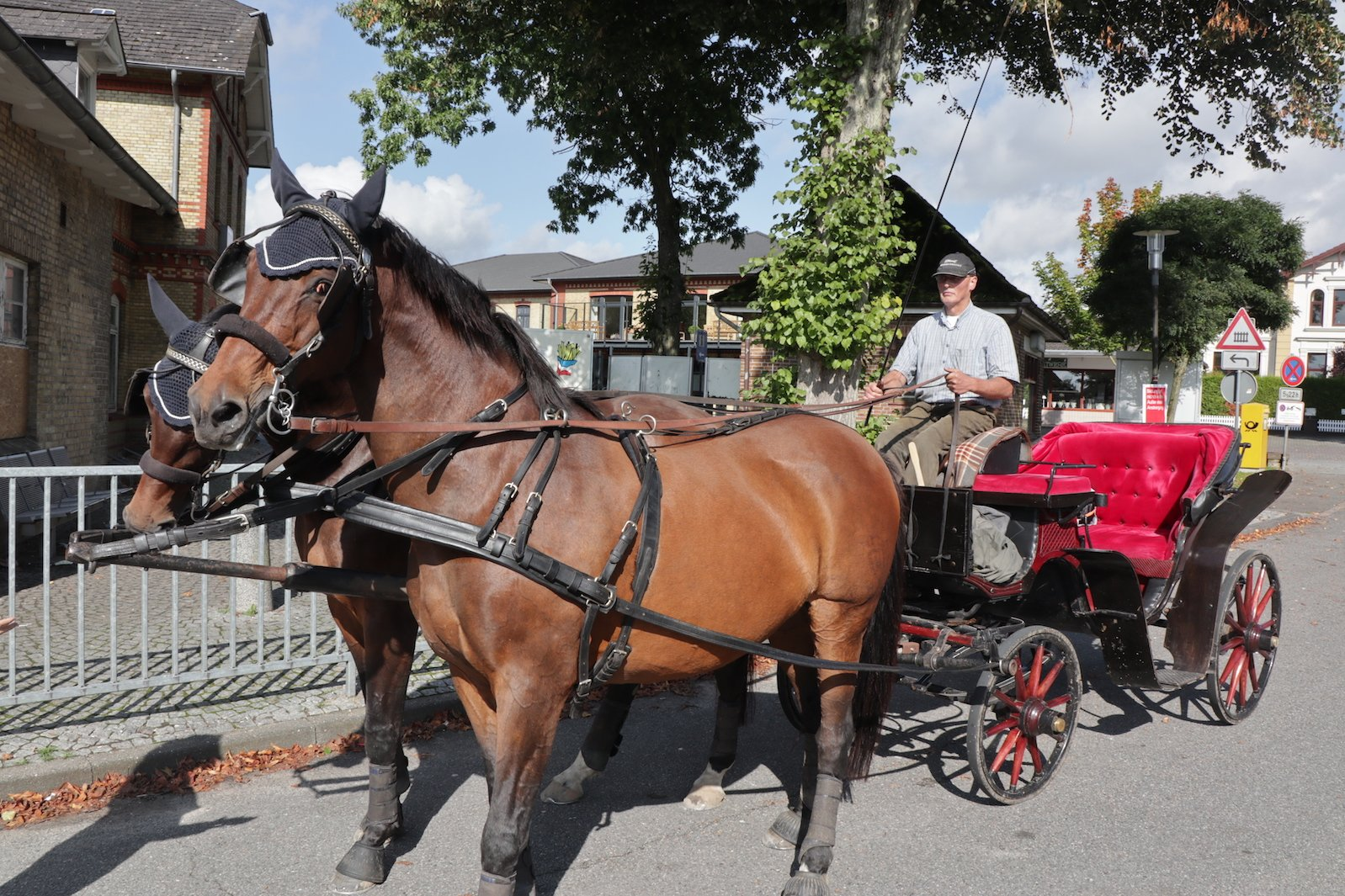 Diedrich Petersen mit seinem Prachtstücken - zwei selbstgezüchtete Pferde und die Hochzeitskutsche