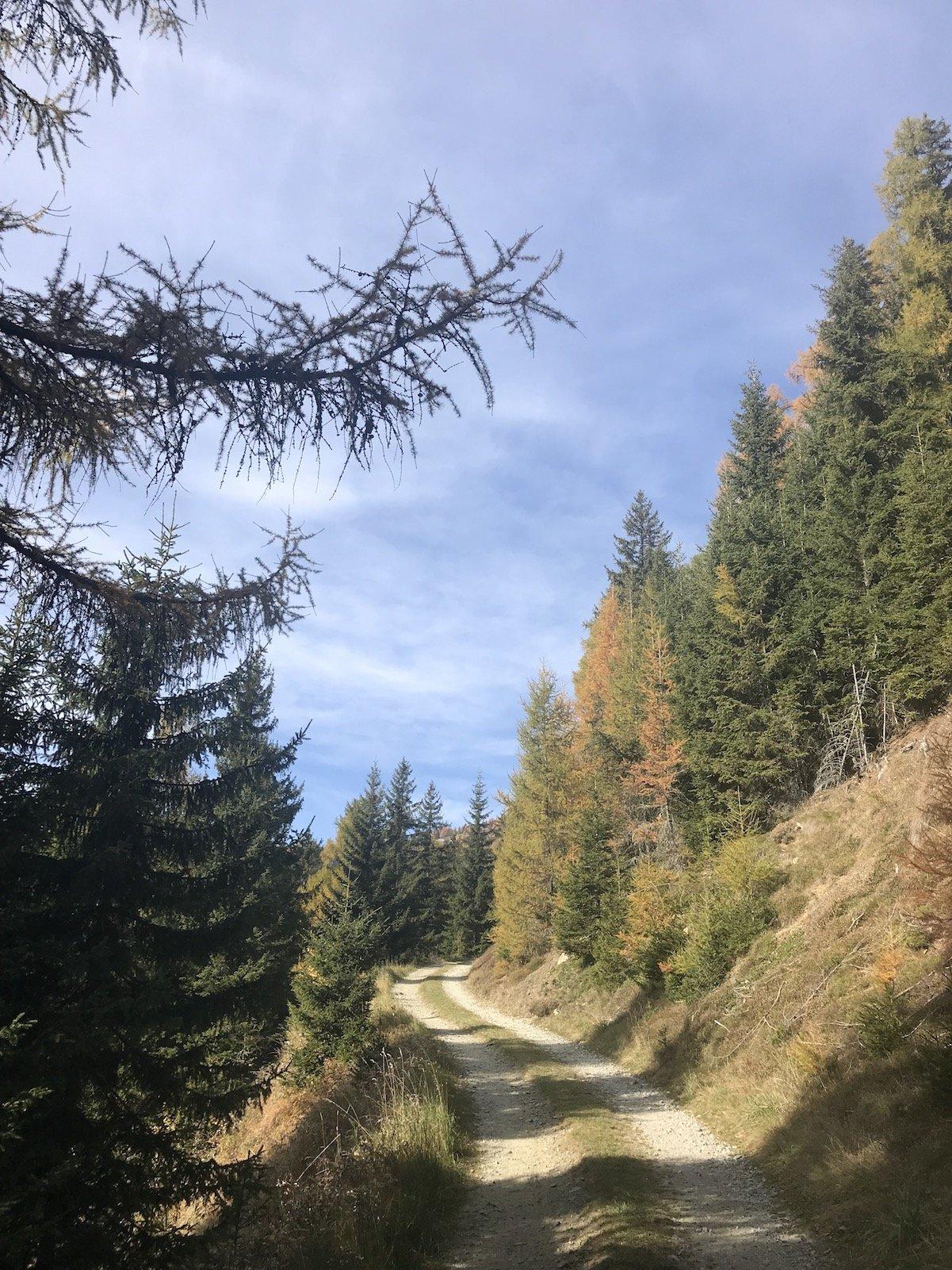 Meine Wanderautobahn mit schönen herbstlichen Bäumen an den Seiten