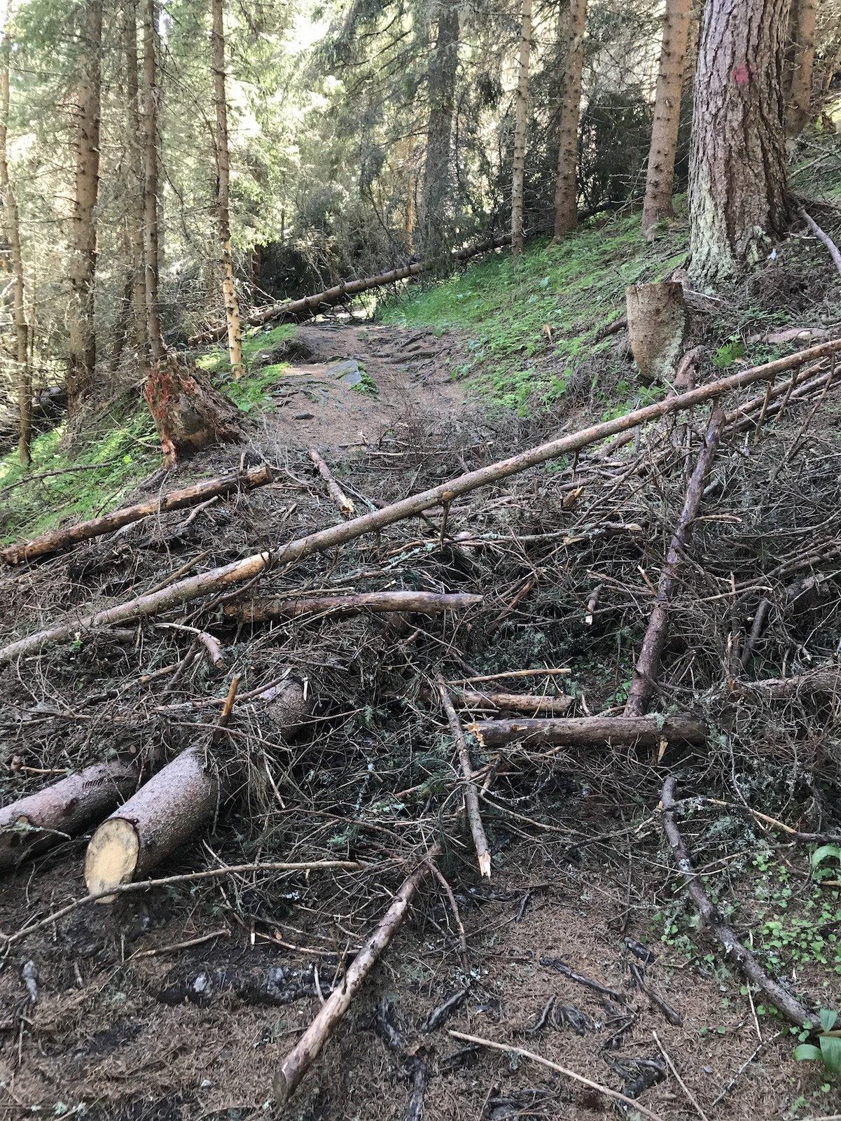 Ein paar Baumreste auf dem Wanderweg, leicht zu überqueren