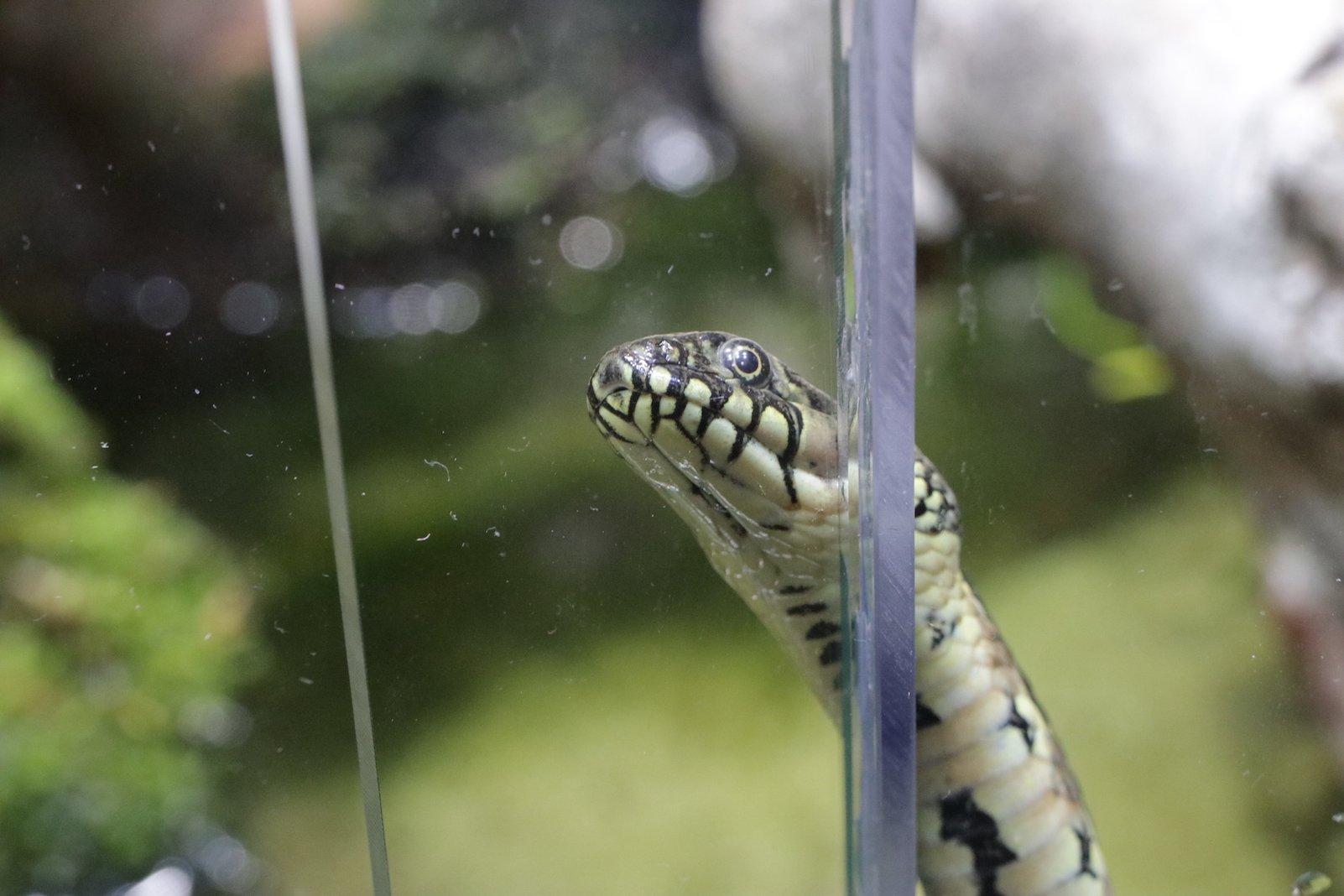 Neugierige Schlange im Klimahaus Bremerhaven