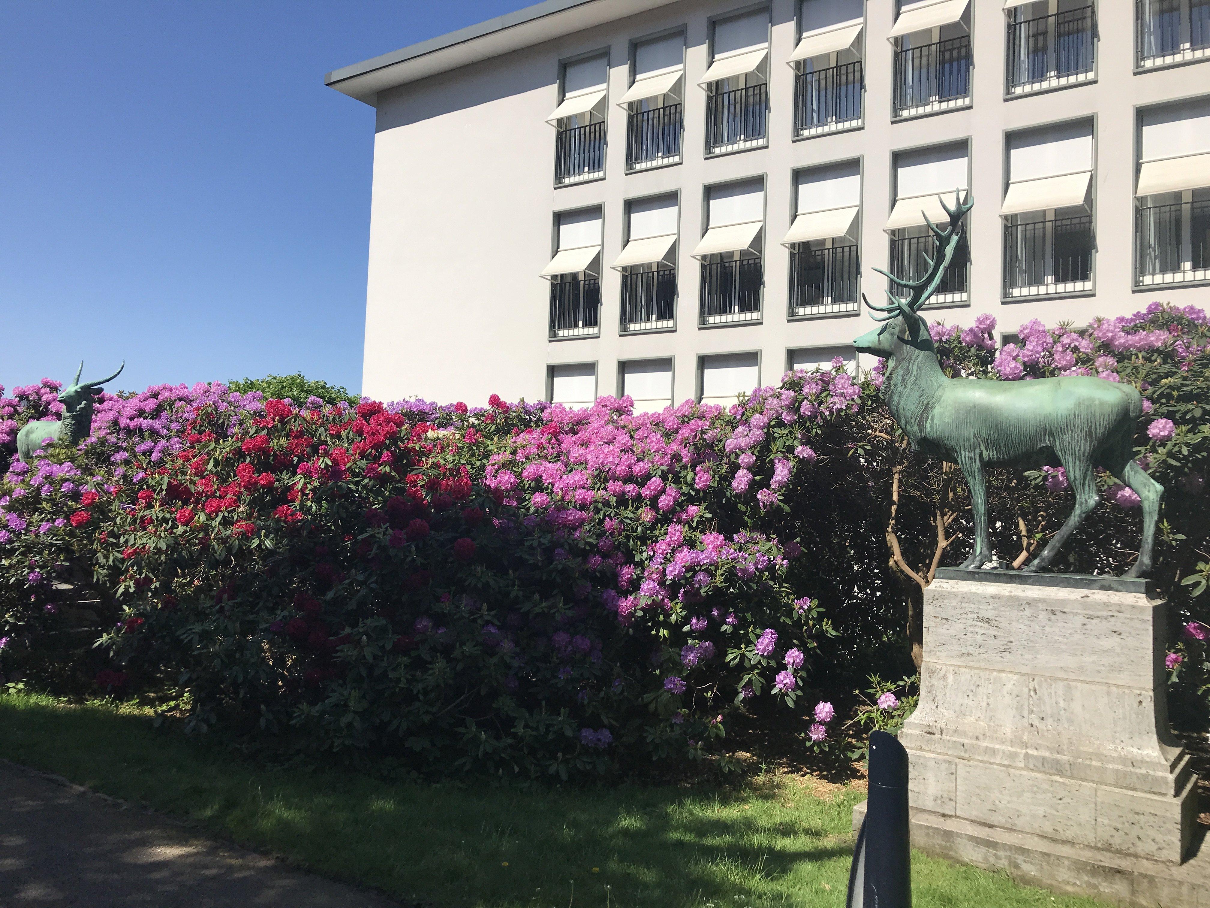 Hirsch vor Blumen ;)