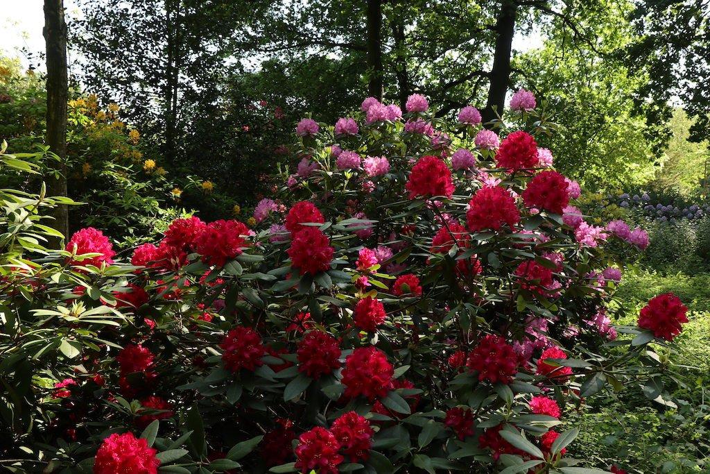 Pflanzenpracht im Bürgerpark Bremen